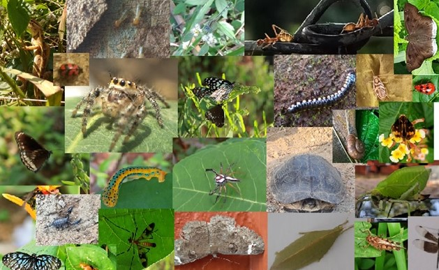 Capturing the Faunal Diversity: Photography Competition
